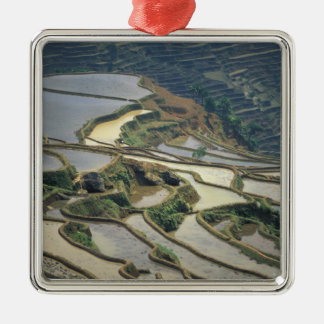 China, Yunnan Province. Flooded rice terraces of Metal Ornament
