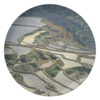China, Yunnan Province. Flooded rice terraces of Plate