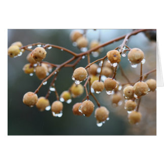 Chinaberry tree in the rain card