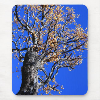 Chinaberry Tree Mouse Pad