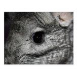 chinchilla eye close up postcards