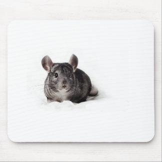 Chinchilla gris linda en manta tapete de ratones