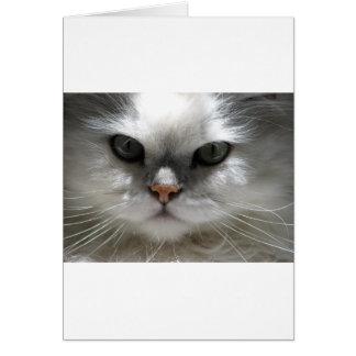 Chinchilla Persian Cat Greeting Card