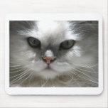 Chinchilla Persian Cat Mousepads