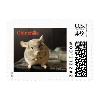 Chinchilla postage stamp