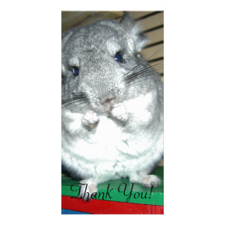Chinchilla Standing On Hind Legs Card