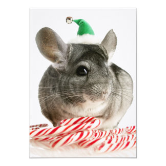 Chinchilla with candy canes card