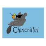 chinchillin tarjetas postales