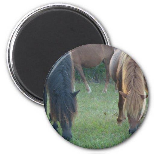 Chincoteague Island / Assateague Island pony Refrigerator Magnets