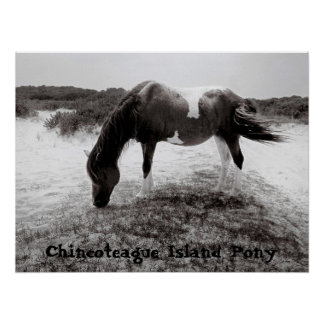 Chincoteague Island Pony Poster