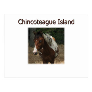 Chincoteague Island Pony Stallion Postcard