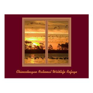 Chincoteague Island Sunset Post Card