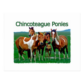 Chincoteague Ponies (family) Postcard
