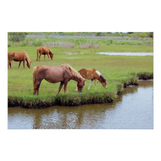 Chincoteague Ponies - Grazing Poster
