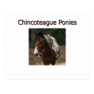 Chincoteague Ponies Logo Postcard