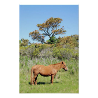 Chincoteague Pony Poster