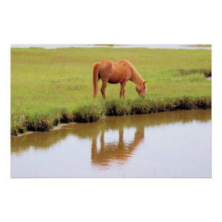 Chincoteague Pony - Reflections Poster