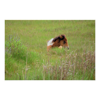 Chincoteague Pony - Yearling in Grass1 Poster