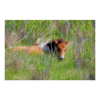 Chincoteague Pony - Yearling in Grass Poster