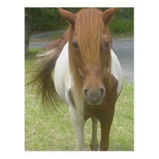 Chincoteague Wild Pony Postcard