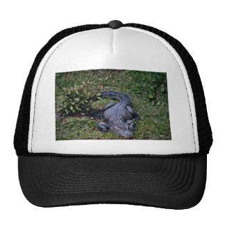 Chinese Alligator Trucker Hat