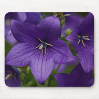 Chinese Bellflower Mouse Pad