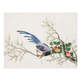 Chinese Bird Painting Postcard