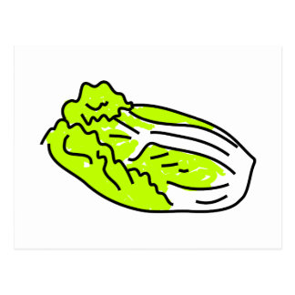 Chinese cabbage postcard
