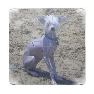 chinese-crested-2 posavasos de puzzle