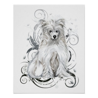 Chinese Crested Blue NB Poster