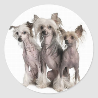 Chinese Crested Classic Round Sticker