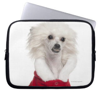 Chinese Crested Dog (1 year old) wearing a Laptop Sleeve
