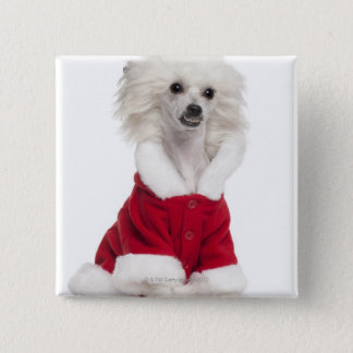 Chinese Crested Dog (1 year old) wearing a Pinback Button