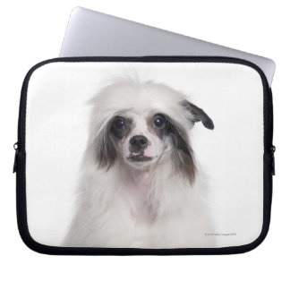 Chinese Crested Dog (7 months old) Computer Sleeve