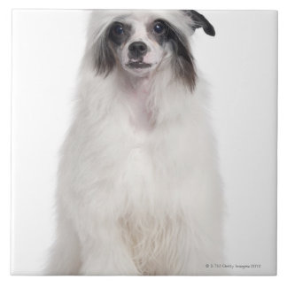 Chinese Crested Dog (7 months old) Tile