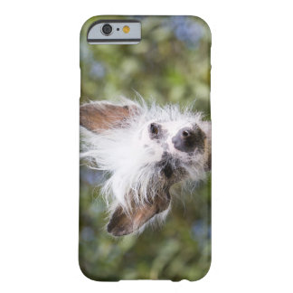 CHINESE CRESTED DOG (HAIRLESS) BARELY THERE iPhone 6 CASE