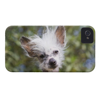 CHINESE CRESTED DOG (HAIRLESS) Case-Mate iPhone 4 CASE