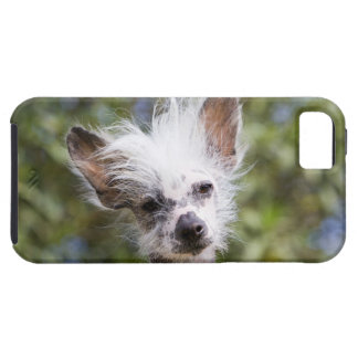 CHINESE CRESTED DOG (HAIRLESS) iPhone SE/5/5s CASE