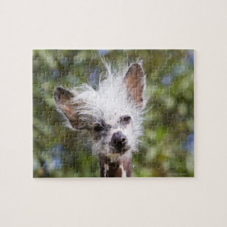 CHINESE CRESTED DOG (HAIRLESS) JIGSAW PUZZLE