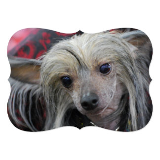 """Chinese Crested Dog 5"""" X 7"""" Invitation Card"""
