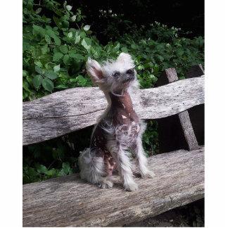Chinese_Crested_Dog sitting 2.jpg Cutout