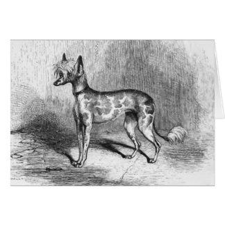 Chinese Crested Dog Vintage Dog Illustration Card