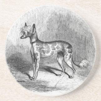 Chinese Crested Dog Vintage Dog Illustration Drink Coaster