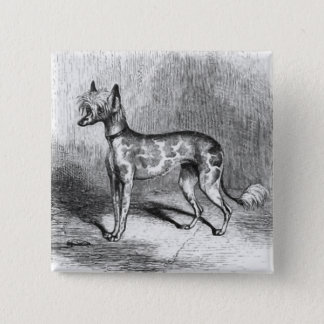 Chinese Crested Dog Vintage Dog Illustration Pinback Button