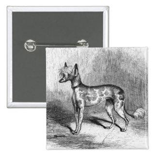 Chinese Crested Dog Vintage Dog Illustration Pinback Button