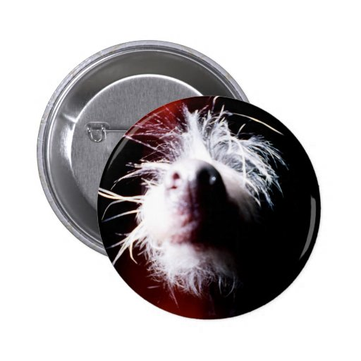 Chinese Crested Fisheye Buttons