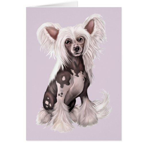 Chinese Crested Hairless Sit Card