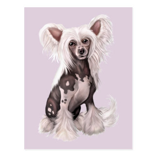 Chinese Crested Hairless Sit Postcard