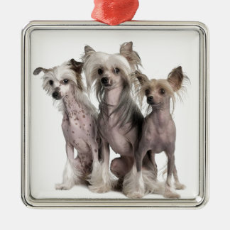 Chinese Crested Metal Ornament