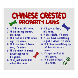 CHINESE CRESTED PL2 POSTER